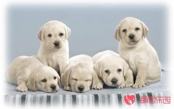 狗狗的生活习性有哪些